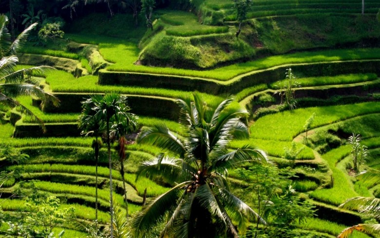 Tegalalang-Rice-Terraces