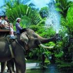 elephant-tour