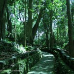 ubudmonkeyforest-002