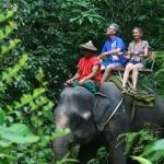 desa-taro-elephant-park-bali