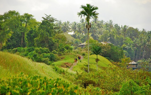 campuhan-ridge-walk-ubud