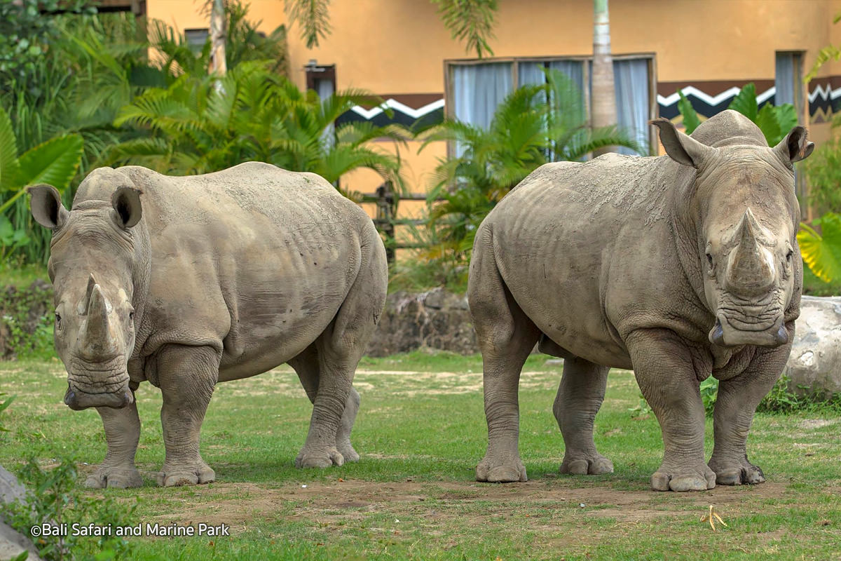Bali-Safari-Marine-Park-4
