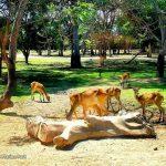 Bali-Safari-Marine-Park-6