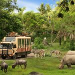 Safari Journey (1)