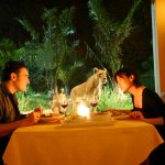 dine on Tsavo  lion restaurant