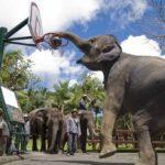 bali-elephant-safari