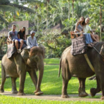 bali-elephant_riding3