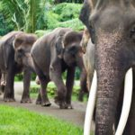elephant-safari-park-taro_0